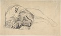 The Head of a Recumbent Lion MET DP805843.jpg
