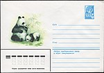 The Soviet Union 1980 Illustrated stamped envelope Lapkin 80-64(14078)face(The giant panda).jpg