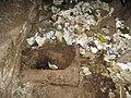 The alternative very neglected pit latrine (3562895126).jpg