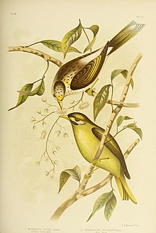 The birds of Australia (16298373353).jpg
