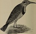 The birds of Ontario in relation to agriculture (1901) (14562850319).jpg