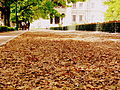 The blanket of leaves.JPG