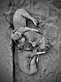 Three adorable street pooches cuddled up in love.jpg