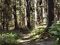 Tongass National Forest 538.jpg
