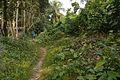 Track Towards Manasa Mound Top - Manasapota - Simurali 2016-12-18 2204.JPG