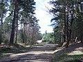 Track through Yateley Heath Wood - geograph.org.uk - 755420.jpg