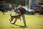 Training Unleashed, Marine dog handler shares bond with canine 131015-M-NP085-015.jpg
