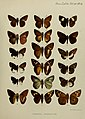 Transactions of the Zoological Society of London (1897) Plate XX.jpg