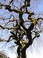 TreeAtFILOLI.JPG