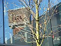 Tree & Twentse Welle.JPG