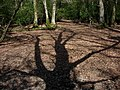 Tree Shadow - geograph.org.uk - 393032.jpg