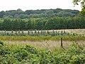 Tree nursery near Buschbell - geo.hlipp.de - 41317.jpg