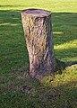 Tree stump, South Lodge Drive, London N14 - geograph.org.uk - 998409.jpg