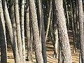 Trees (3816151558).jpg