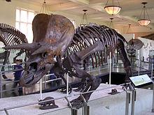 Historická geologie – Wikipedie