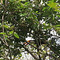 Tucano na região.JPG