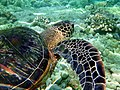 Turtle close up.jpg