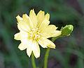 UMFS flower 4.jpg