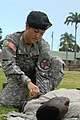 US Army 51893 Paralegal Warriors compete for best in USARPAC.jpg