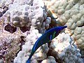 Underwater rainbow 5.jpg