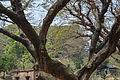 Unidentified trees in CRB (02).jpg