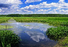 Union Township, Conneaut Marsh.jpg