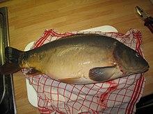 Un gros poisson lisse, verdâtre à reflets mordorés