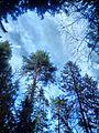 Valdaysky District, Novgorod Oblast, Russia - panoramio (3379).jpg