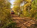 Velichov forest M286.JPG