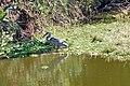 Victoria Falls 2012 05 24 1681 (7421907368).jpg