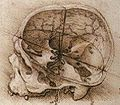 View of a Skull.jpg