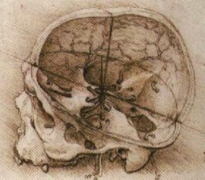 History of neuroscience - One of Leonardo da Vinci's sketches of the human skull