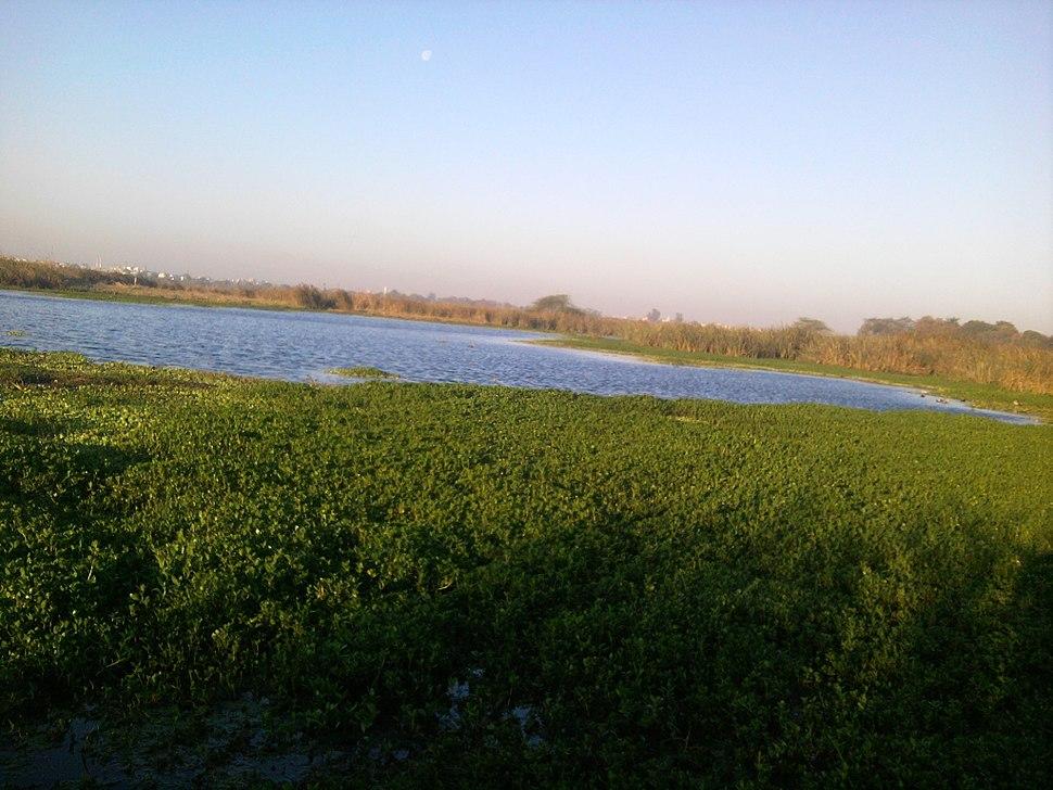 View of yamuna from okhla bird sanctuary
