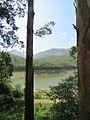 Views around Munnar, Kerala (76).jpg