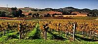 Vineyards in Napa Valley.jpg