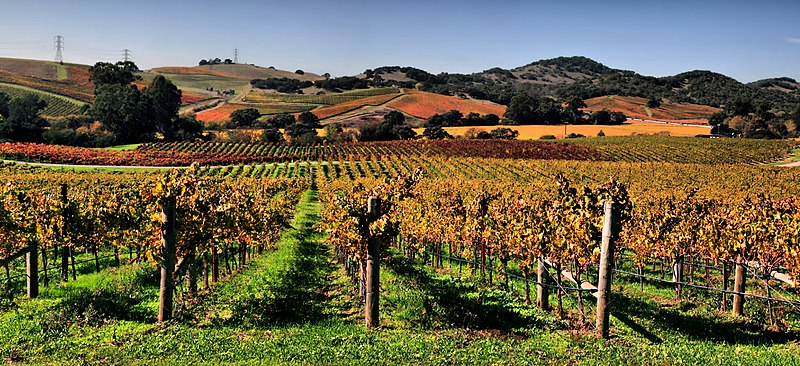 File:Vineyards in Napa Valley.jpg