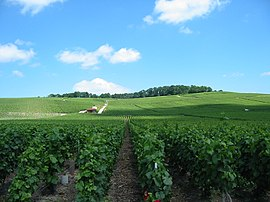 Vineyards near Épernay