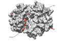 WEE1 KINASE DOMAIN IN COMPLEX WITH BOSUTINIB.png