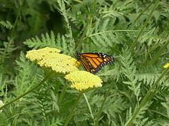 WPZ Butterflies & Blooms 08.jpg