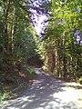 Waldweg - bei Prevorst - geo.hlipp.de - 27682.jpg