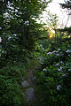 Walking-trail-mountain-flowers - West Virginia - ForestWander.jpg