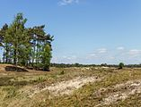 Wandeling over het Hulshorsterzand-Hulshorsterheide 12.jpg