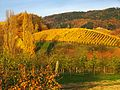 Wein - panoramio (3).jpg