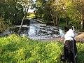 Westwater Weir - geograph.org.uk - 1021826.jpg