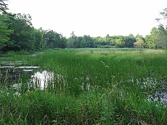 Marsh Island (Maine) - Image: Wetland on Marsh Island