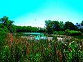 Wetlands Off Rimrock - panoramio.jpg