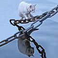 White cat over water 2012.jpg