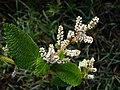 Whiteflowers9.jpg