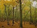 Wickham Wood - geograph.org.uk - 1562196.jpg