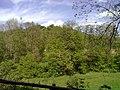 Wiese im Tal der Kurzach - geo.hlipp.de - 24923.jpg